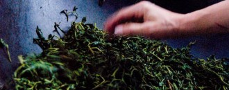 Hand Processed Green Tea