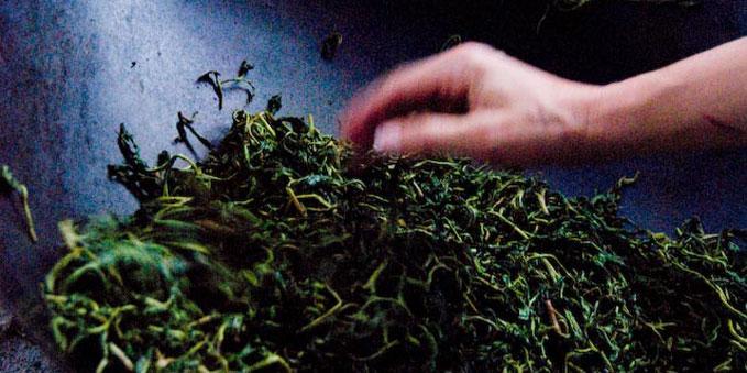Hand Processed Green Tea